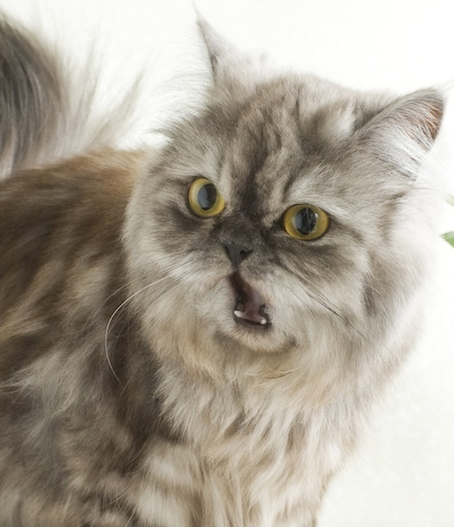 cat 300.9 d price