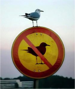 seagull-sign